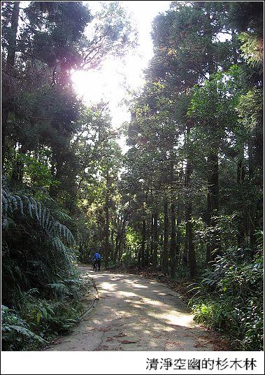 清淨空悠的杉木林.jpg