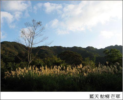 藍天 芒草.jpg