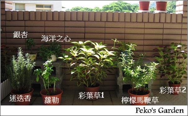 小花園-20090920.jpg