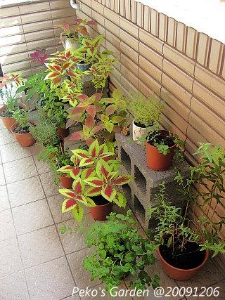小花園-20091206-1.jpg