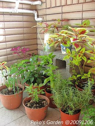 小花園-20091206-2.jpg