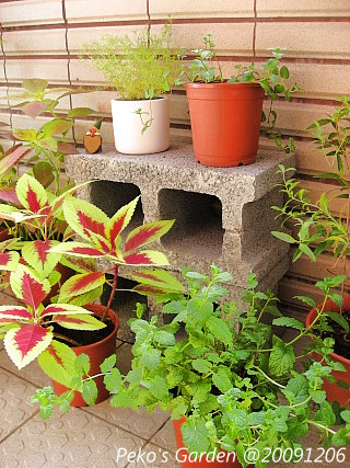 小花園-20091206-3.jpg