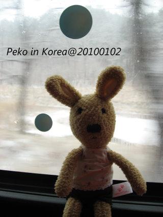小兔遊韓國.jpg