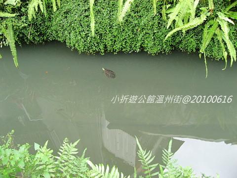 烏龜漂游.jpg