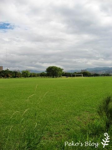 大樹與草地.jpg