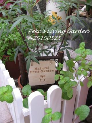 petit garden.jpg