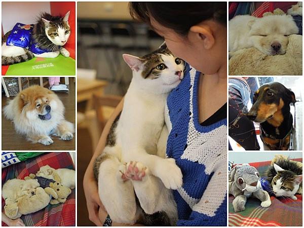 板橋 寵物餐廳 寵物住宿 人文咖啡07