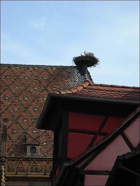 柯瑪市政廳~鳩鳥巢