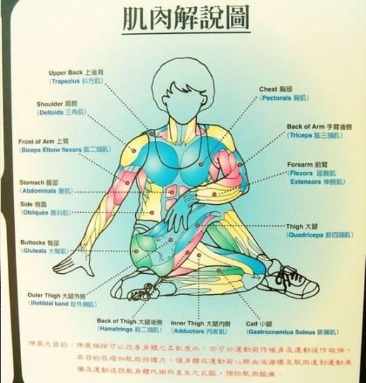 拉筋肌肉解說