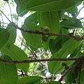 淡水工商植物