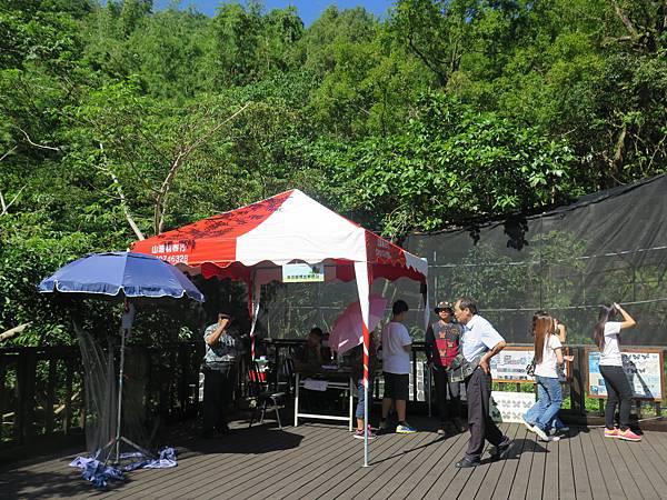 6紫蝶標放解說站 (5).JPG