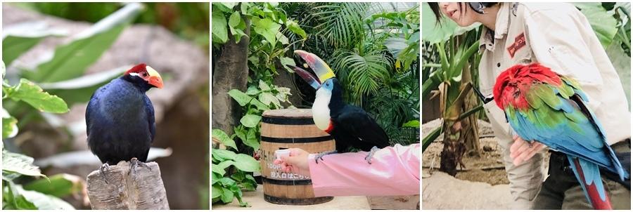 神戶動物王國鸚鵡