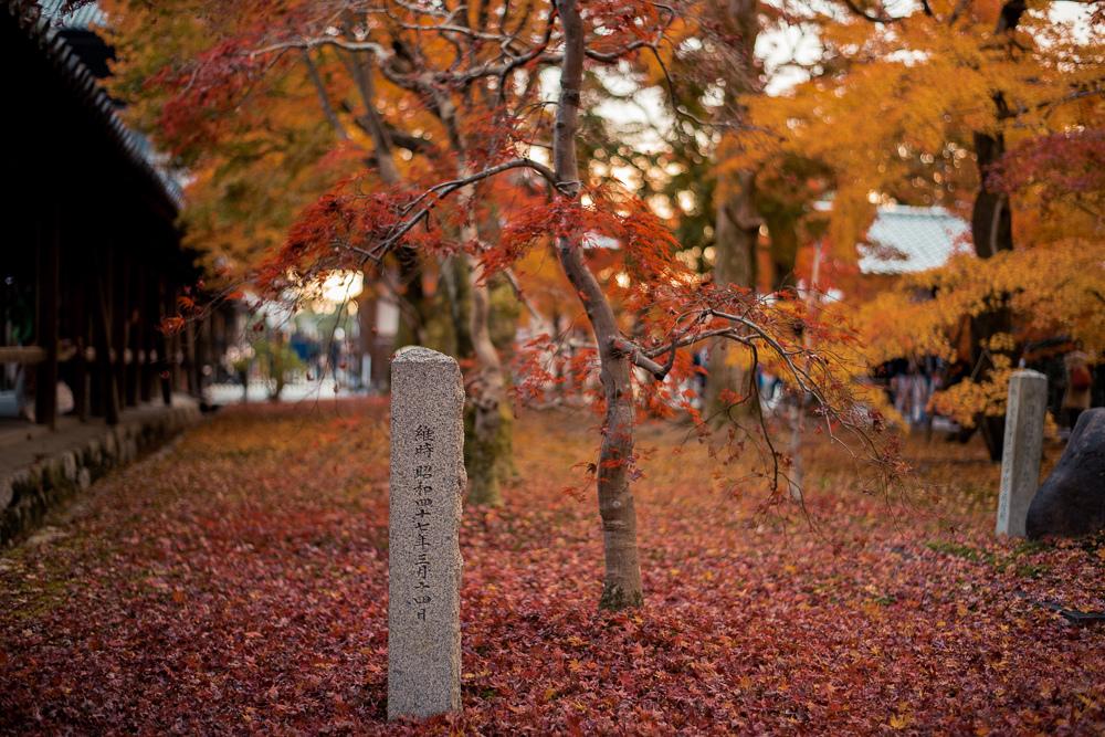 東福寺賞楓