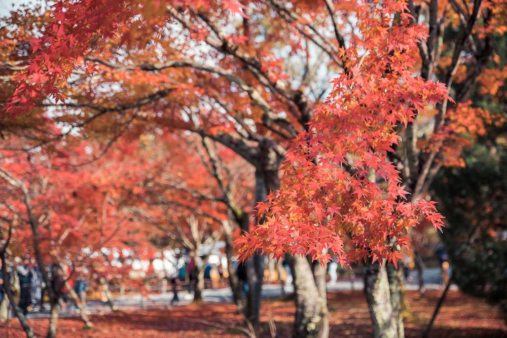 京都南禪寺