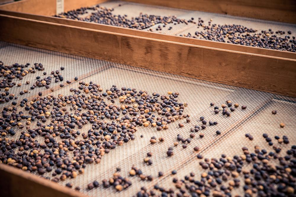 大鋤花間咖啡生態農場