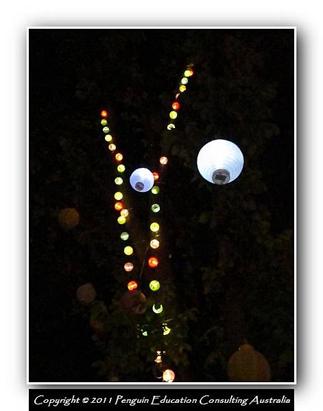 Xmas Light 2011.25.JPG