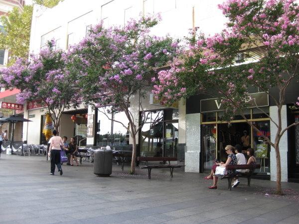 雪梨-唐人街