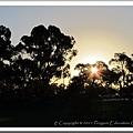 Kings Park - West Perth 20110510 (17).jpg