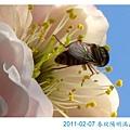 IMG_7088-1.jpg