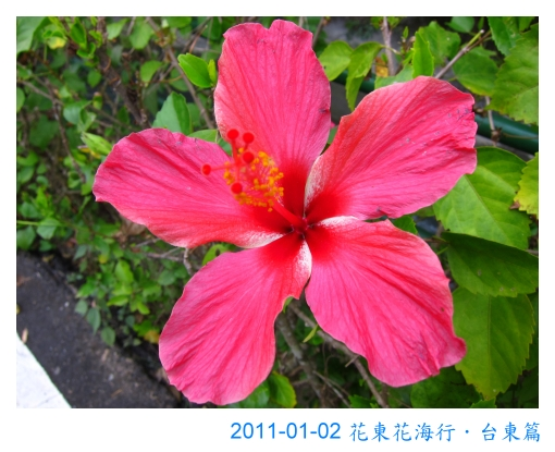 IMG_3020.jpg