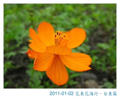 IMG_3911.jpg