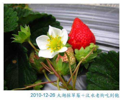 IMG_2550.jpg