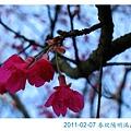 IMG_7279.jpg