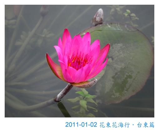 IMG_3905.jpg