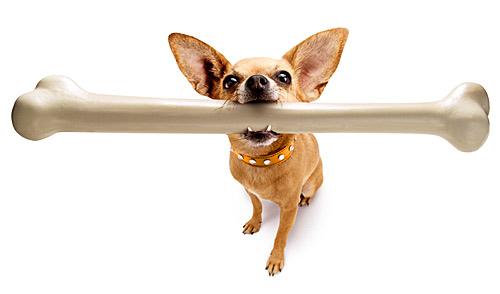 dog-bone.jpg