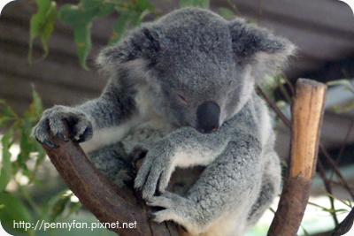Koala05.JPG