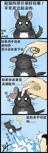 龍貓日記7