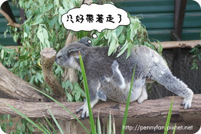 Koala17.JPG
