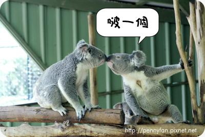 Koala18.JPG