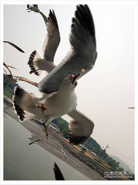 韓國之旅-渡輪上餵海鷗2.JPG