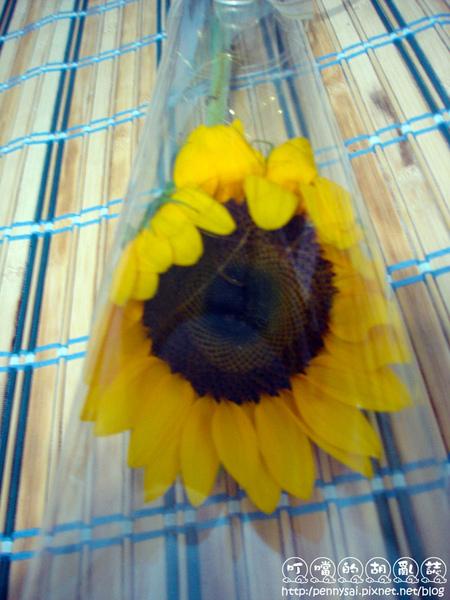 炮台送的花.jpg
