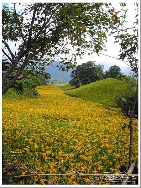 花蓮.六十石山 - 金針花