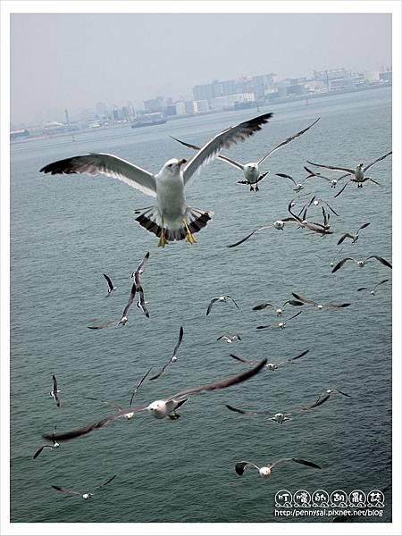 韓國之旅-海鷗群飛2.JPG