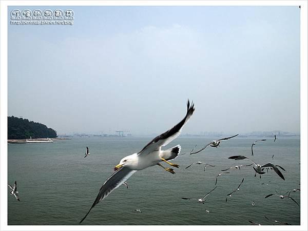 韓國之旅-海鷗群飛1.JPG