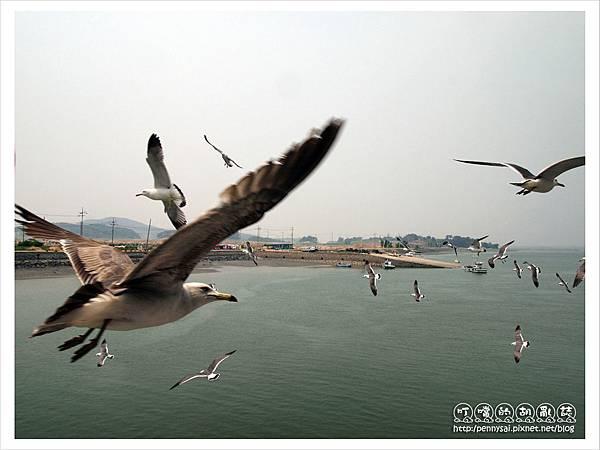 韓國之旅-渡輪上餵海鷗1.JPG