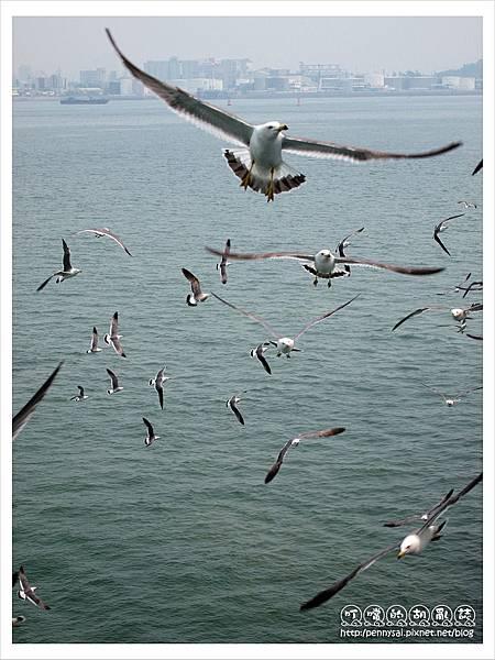 韓國之旅-海鷗群飛3.JPG