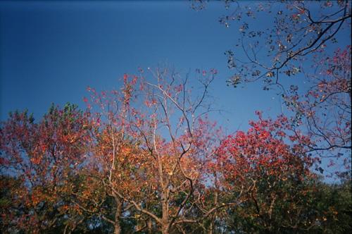 秋天的感覺