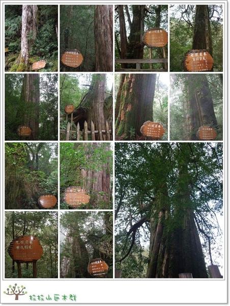 巨木群.jpg