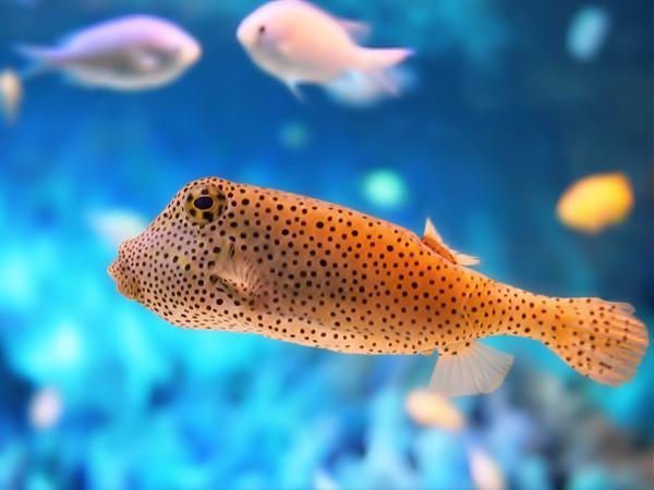 Fish_1600.jpg