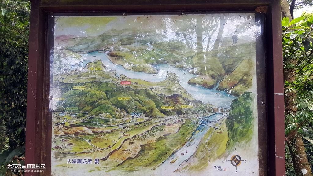 桃園市大溪區《大艽芎古道賞桐花》
