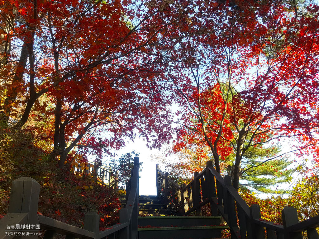 【首爾自由行】《晨靜樹木園》