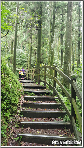 東眼山國家森林遊樂區