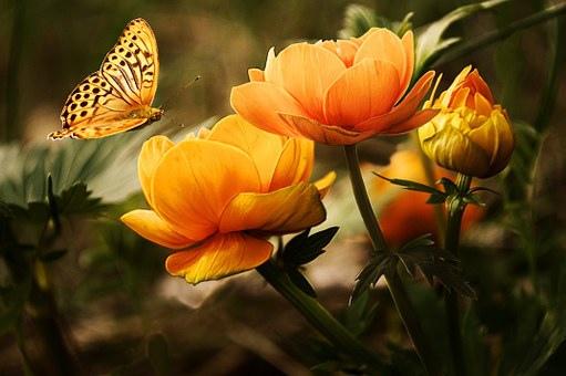 beauty_013.jpg