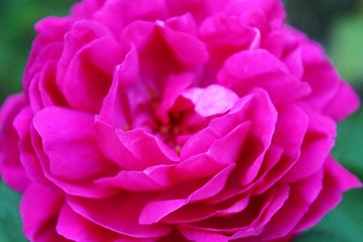beauty_017 (1).jpg