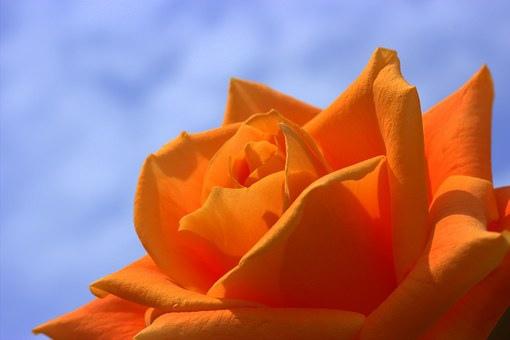 beauty_028 (1).jpg