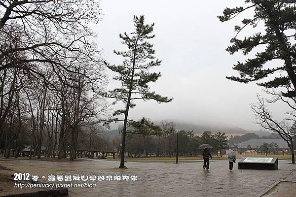 59.奈良公園
